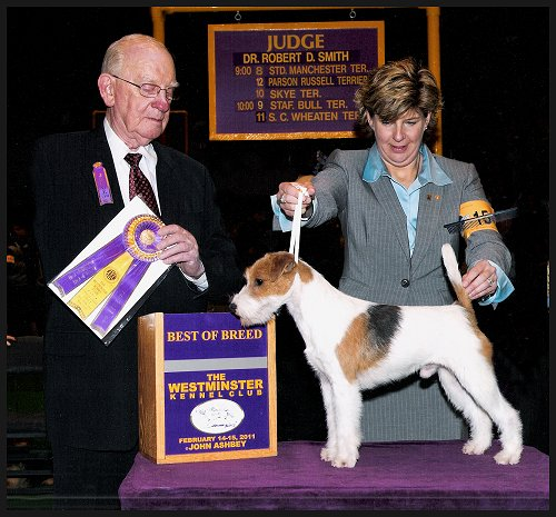 Parson Russell Terrier news